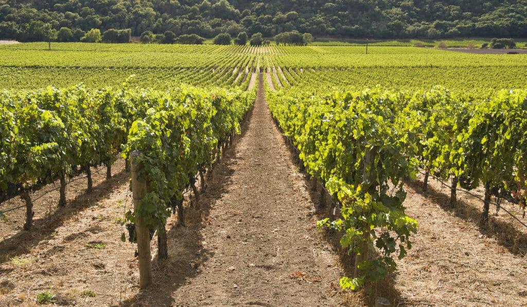 Treasury Wine Estates offers a snapshot of modern Californian wines